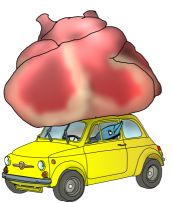 A blue whale heart is the approximately the same size as a VW.