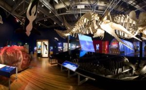 Whale lab in the exhibition