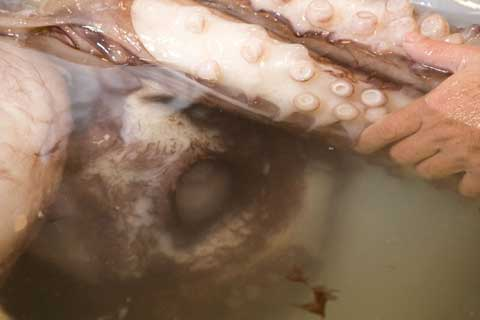 Eye of Colossal Squid