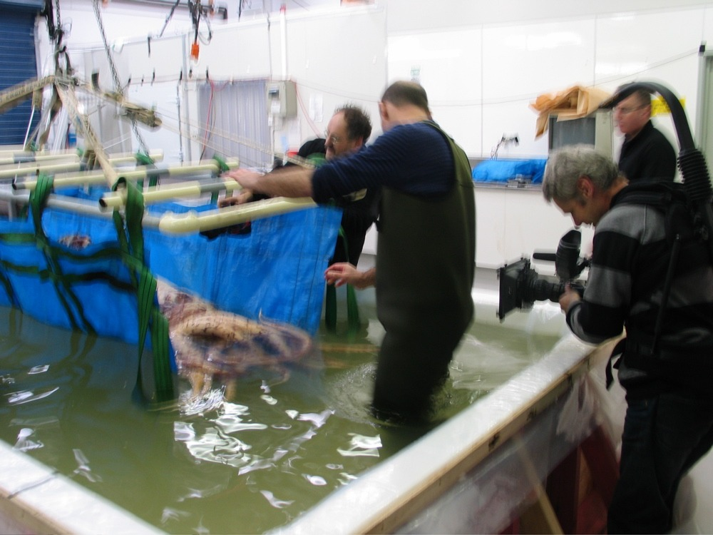 The team moves the squid into the cradle, ready to move. © Copyright Museum of New Zealand Te Papa Tongarewa, 2008
