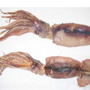 Preserved squid - shrunk to size!