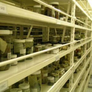 Jars of coralline specimens shelved at Te Papa's Tory St. spirit store