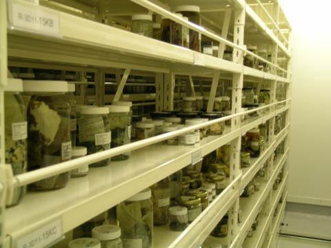 Jars of coralline specimens shelved at Te Papa's Tory St. spirit store