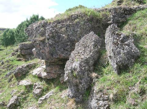 These rocks are host to several plants of tetraploid maidenhair spleenwort.