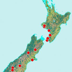 Distribution of male fern, Dryopteris filix-mas, in New Zealand, based on specimens in Te Papa's WELT herbarium. Note that this is a significant under-representation.