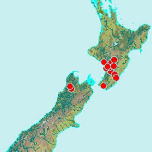 Distribution of Equisetum arvense in New Zealand as indicated by verifiable specimens in Te Papa's herbarium. Te Papa's collection is an under-representation of this species' full extent, having been recorded by others from Auckland, Napier, New Plymouth, Christchurch, and Dunedin.