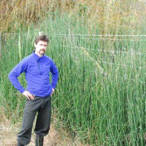 An unimpressed Jon Terry (DOC) with the Levin infestation of Equisetum hyemale. Photo by Clayson Howell, DOC. Copyright Clayson Howell, Wellington.