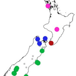 The four principal genetic groups detected by microsatellite DNA-fingerprinting in fierce lancewood are indicated by different colours. The small grey circles are populations that we haven't sampled, but which are represented by specimens in the herbarium collections of Te Papa, Auckland Museum, and Landcare Research.