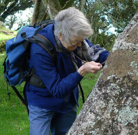 Barbara Polly, Te Papa Research Associate, inspecting the lichens on a tree trunk.  Photo by Leon Perrie, Curator. (c) Museum of New Zealand Te Papa Tongarewa.