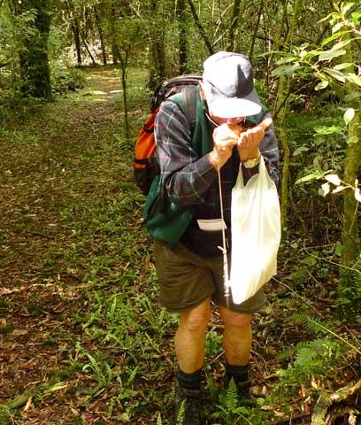 Peter Beveridge, Te Papa Research Associate, using a hand-lens to examine a moss sample. Photo by Leon Perrie, Curator. (c) Museum of New Zealand Te Papa Tongarewa.