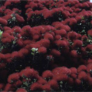 New Zealand scenery, 1960s - 1980s, Brian Brake