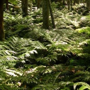 King Fern Gully, Pukekura Park. Photo by Leon Perrie.