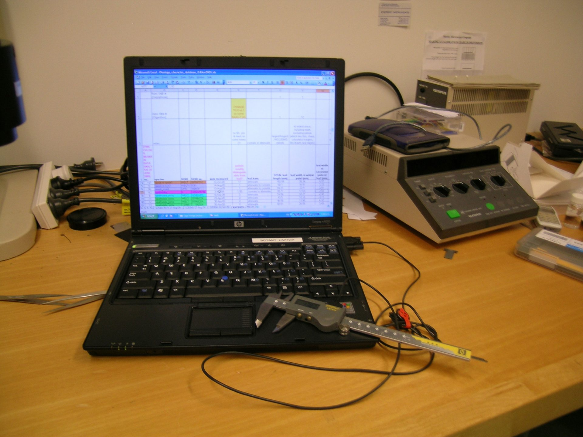 Calipers and laptop with data matrix of morphological characters. Photo © Museum of New Zealand Te Papa Tongarewa.