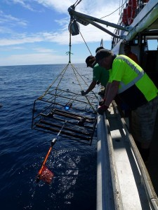 Te Papa scientists recovering a video unit sent underwater to film deep-sea fish life.