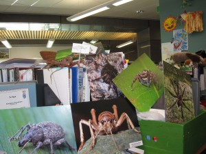 Bryce McQuillian's photographs in the Discovery Centre offices