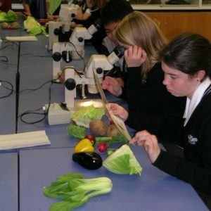 The budding botanists from Hutt Valley High School classifying the fruits and vegetables. Photo @ Te Papa.