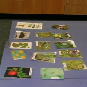 Here were some photos of additional information each group could use during the activity. Photo @ Te Papa.