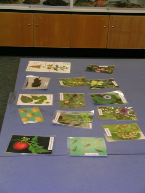 Some photos of additional information each group could use during the activity. Photo © Te Papa.