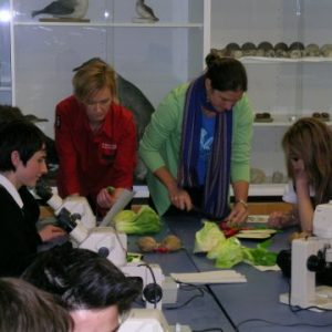 Here is Research Scientist Heidi Meudt, together with Te Papa host Emma Best, helping the students with a dissection. Photo @ Te Papa.