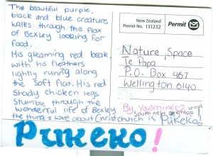 The pukeko is why Yasmin loves Christchurch