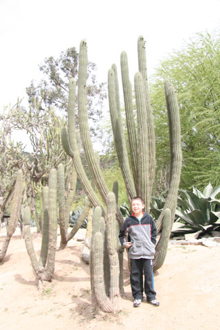 A native cactus in the botanic garden. We also saw several other candelabria-type cacti like this one on the highway between Santiago and Viña del Mar. Photo © Heidi M. Meudt.