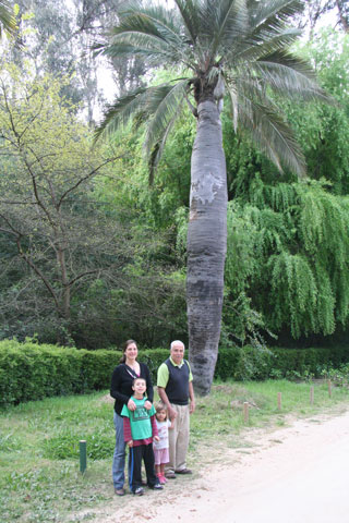 Here I am with some of my family in front of a specimen of Jubaea chilensis, the native Chilean palm, with its uniquely stout trunk. Photo © Mauricio A. López L.