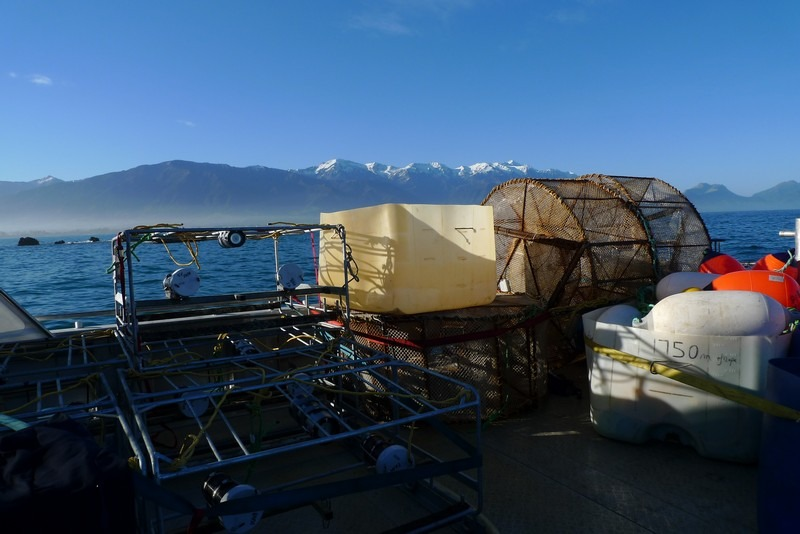 The Kaikoura range in the background.