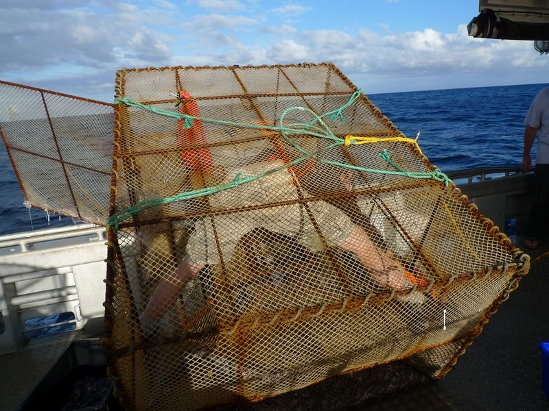 Carl extracting hagfish specimen out of one fish trap. Te Papa, photograph by Vincent Zintzen.