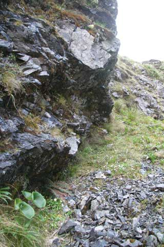 Forget-me-not and foxglove habitat in Otira Valley, Arthur's Pass National Park, Dec 2010. Photo by Heidi Meudt.