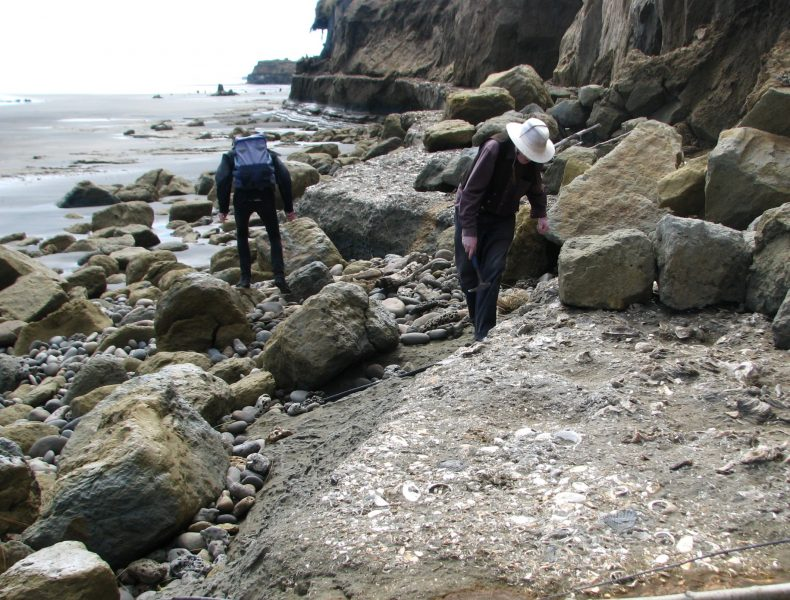 Bruce and Simon checking out the fossils in the Waverley Shellbed, north of the settlement at Waverley Beach. The trunks of the fossil trees from the drowned forest can be seen in the distance (Kristelle, 5/12/2010)