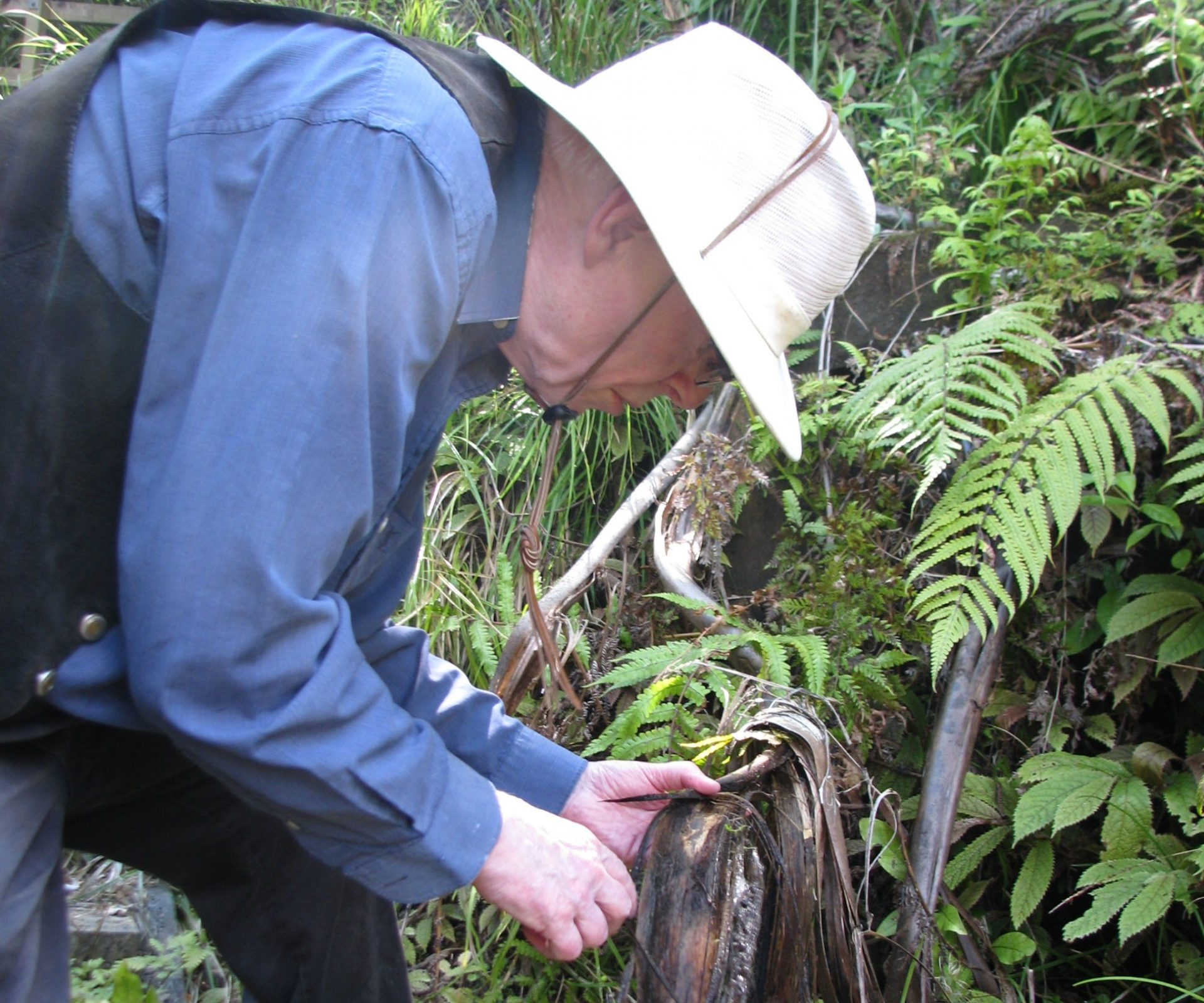Bruce collecting tiny freshwater snails (length about 2.4 mm) from a seep in the forest at Lake Rotorangi (4/12/2010)