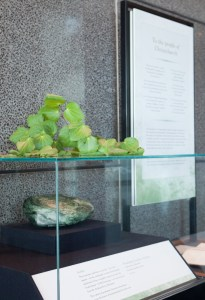 Christchurch Memorial Display, Wellington Foyer, Te Papa