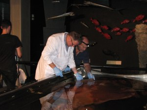 Robert and Don examine the mantle of the colossal squid.