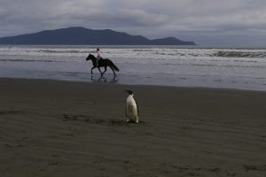 Kapiti Beach