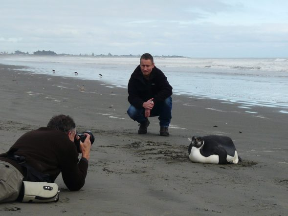 Colin and the emperor penguin face the media. Photo: Alan Tennyson (Te Papa)