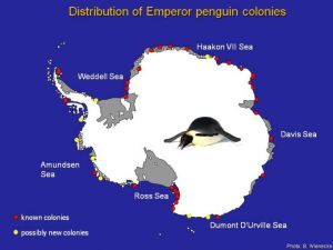 Locations of emperor penguin colonies around Antarctica. Image courtesy of Barbara Wienecke, Australian Antarctic Division