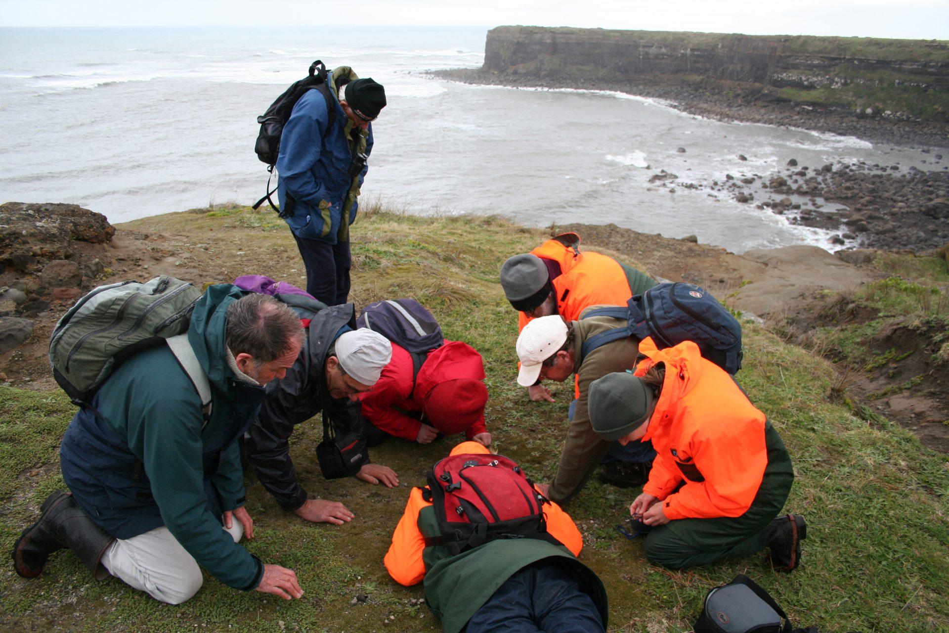 Our plant-hunting crew, finding Myosotis brevis on the Taranaki coast, North Island, New Zealand. Photo by Heidi Meudt, copyright Te Papa.