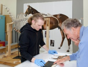 How to mount a horse? Hayden Prujean and Alex Davies discuss the re-articulation of Phar Lap's skeleton. Photo: Te Papa