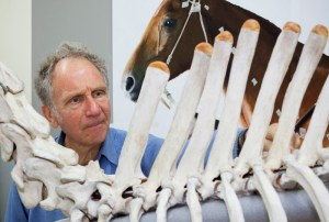 Dr Alex Davies checks the positioning of Phar Lap's thoracic vertebrae. Photo: Te Papa