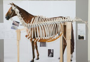 Phar Lap's trunk skeleton imposed on a life-sized image of the mounted skin held in Melbourne Museum. Photo: Te Papa