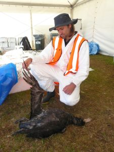 Shane Baylis with a giant petrel that appeared to have died from eating milk powder that spilled from one of the Rena's containers. Photograph by A. Tennyson, Te Papa