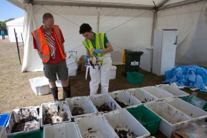 Dead oiled birds being examined by Te Papa scientists. Photograph by and reproduced courtesy of Dominique Filippi