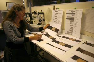 Trish James (Senior Document Examiner) with enlarged images of bird specimen labels at NZ Police National Headquarters. Photo: Colin Miskelly, Te Papa