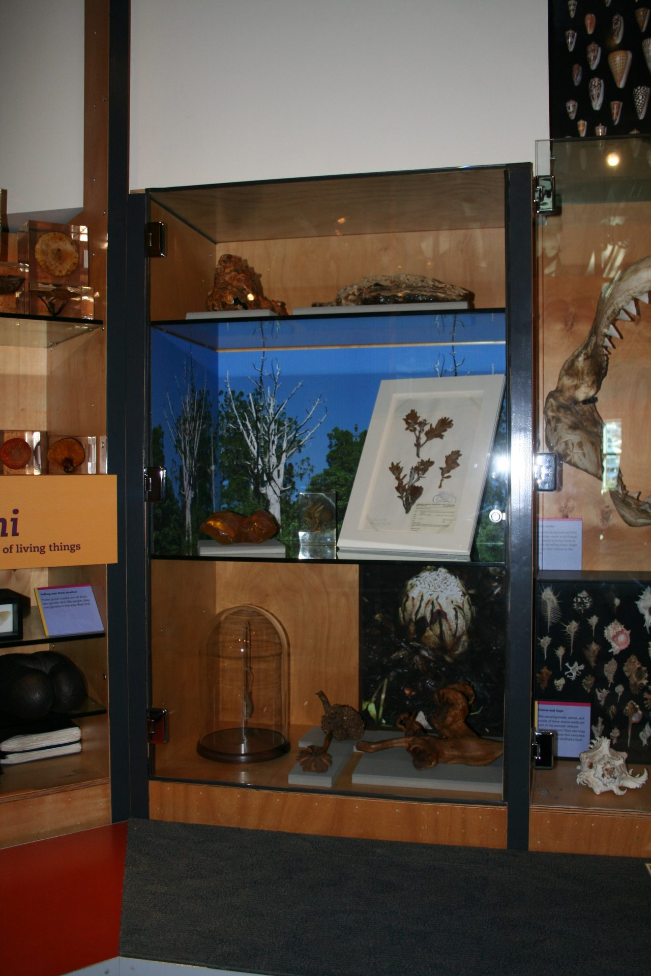 New Display, Nature Space Discovery Centre, Level 2, Te Papa; Photo: Antony Kusabs, Te Papa.