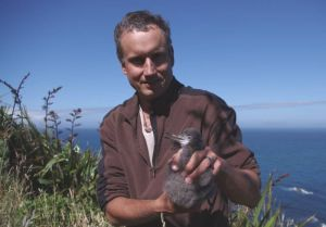 Colin Miskelly holding a fluttering shearwater chick, Mana Island, January 2012. Photo: Kate McAlpine & Colin Miskelly