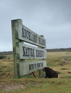 Auckland Islands sign and NZ sea lion pup. Photo Anton van Helden. © Te Papa
