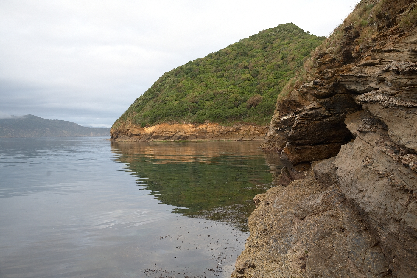 Coastline view of Titi Island, Marlborough where Te Papa carried out shearwater research. Photograph by Jean-Claude Stahl. © Te Papa