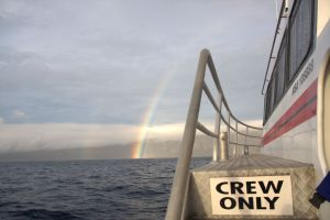 Nice suprise when arriving at the Kermadec Islands during our last survey in May 2011.