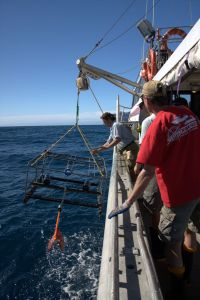A video unit being hauled back after having sampled the fish fauna off the Kermadec Islands at 1200m depth (May 2011).