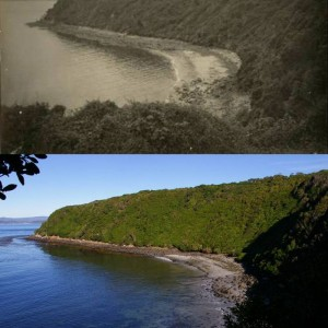 The landing bay on the south side of Jacky Lee Island in 1932 and 2012, viewed from near the hut site (the hut is now derelict). Top image: Edgar Stead photograph 2001.59.382, Macmillan collection, Canterbury Museum. Below photo: Colin Miskelly, Te Papa